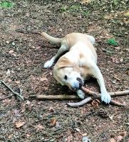 Felix frelste sin hund fra hvalpefabrik! felix smith, tv 2