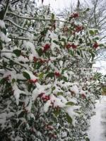 Det bliver ikke en hvid jul! hvid jul, jul, 2013
