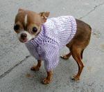 Chihuahua brækker Paula Abduls næse Paula Abdul, chihuahua, american idols